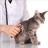 Ветеринарные клиники в Сольцах